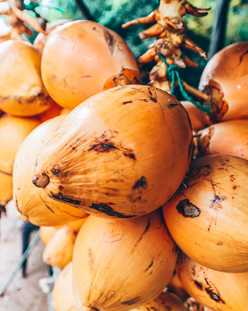 Fresh coconuts in Sri Lanka