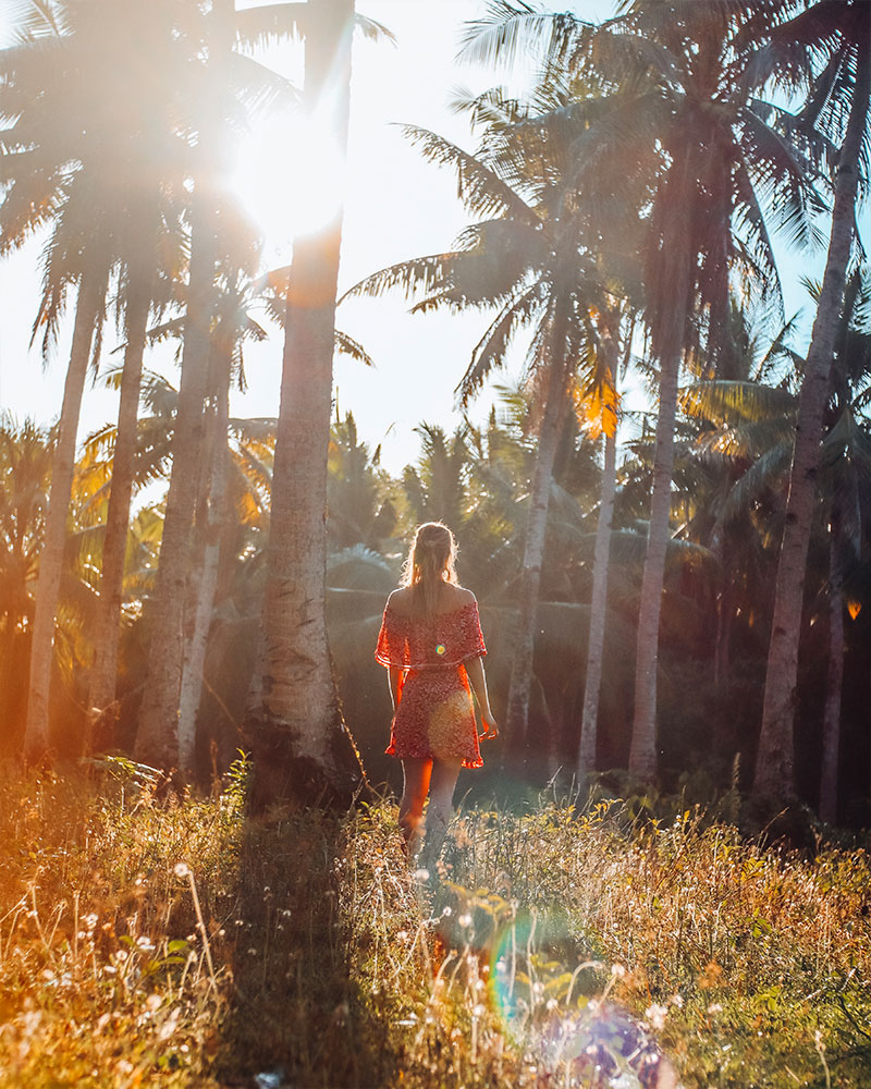 Sunset photos of sun coming through the palm trees on Siargao island in the philippines