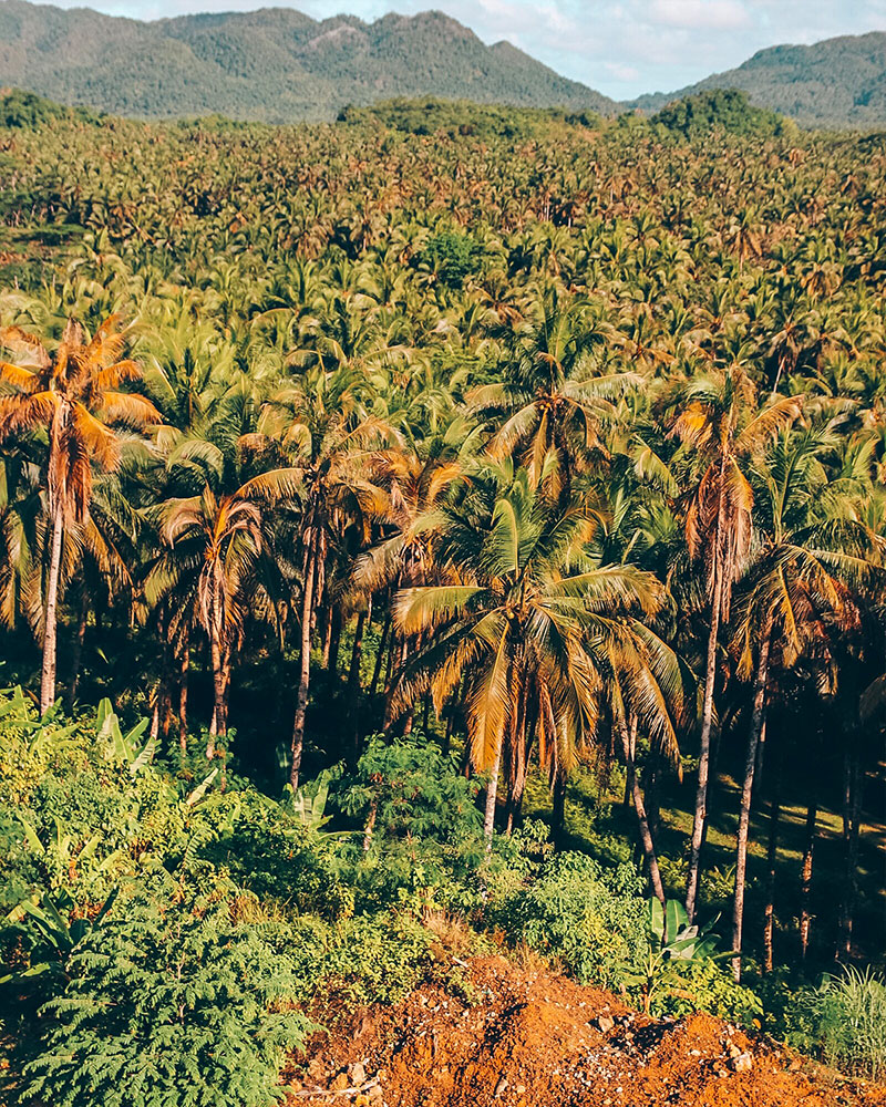Coconut Tree Hill viewpoint in Siargao