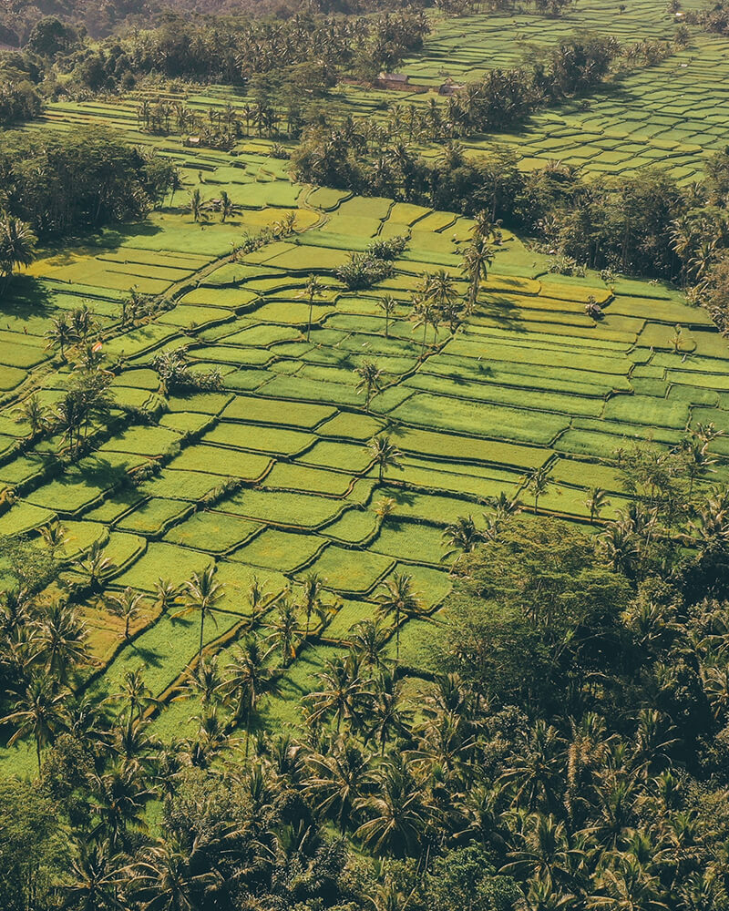 View over a green rice terrace field from the drone, Ubud, Bali, Indonesia