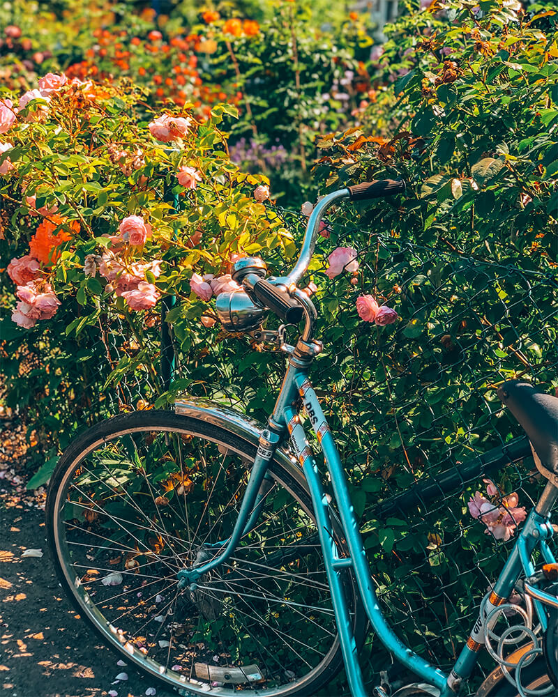 Bicycle surrounded by flowers in Malmö