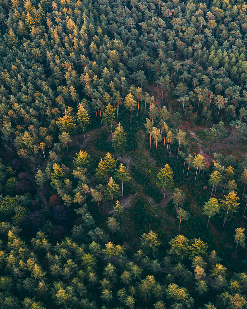 Drone shot of the forest from above