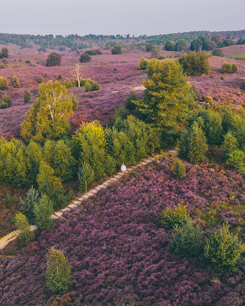 Me standing in the field of heather - drone shot