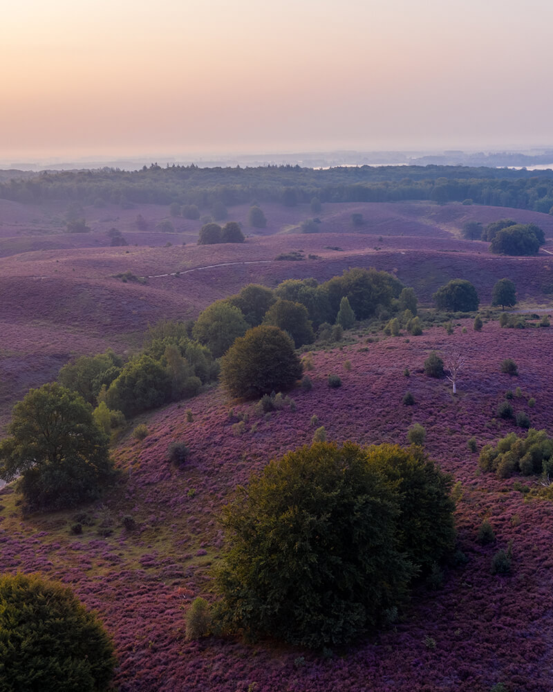Drone shot of the heather - hidden gems in the Netherlands