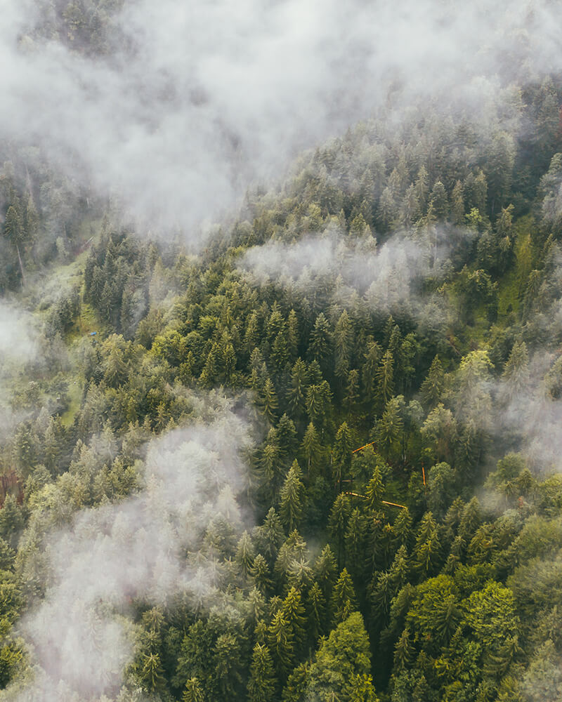 Trees with clouds on top - drone shot in Bavaria