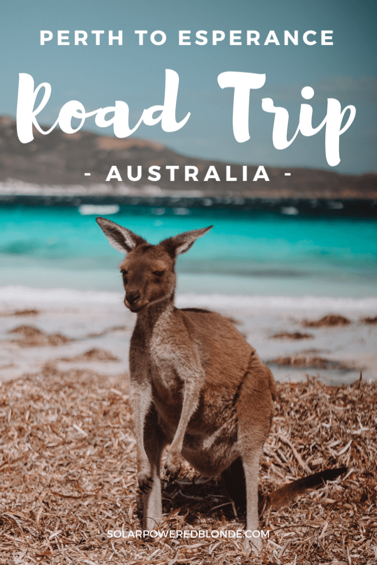 Pinterest Graphic of a kangaroo at Lucky Bay on a Perth to Esperance Road Trip