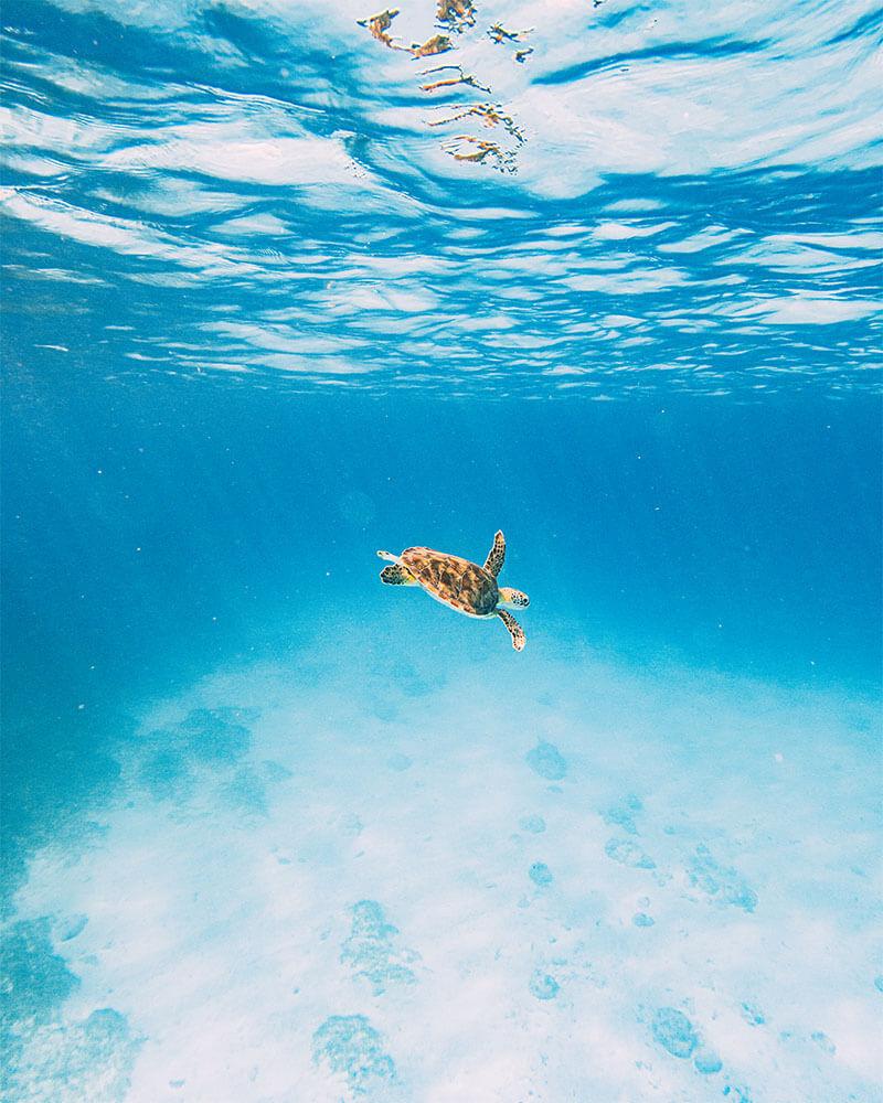 Turtle shot underwater