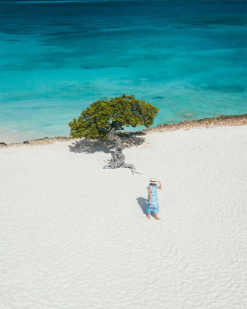 Girl stood on Eagle Beach Aruba with a Fofoti Tree - drone photo